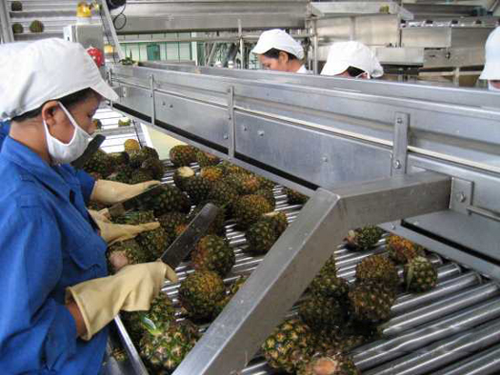 pineapple sorting process